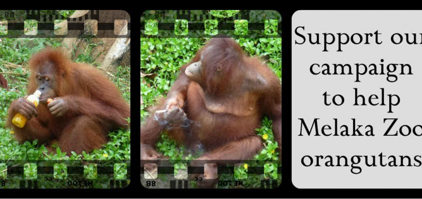 Your support is making a difference at Melaka Zoo!