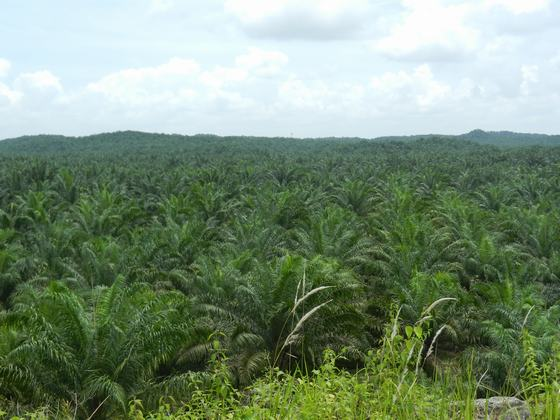 25,000 Hectares of Forest in Sabah in Jeopardy