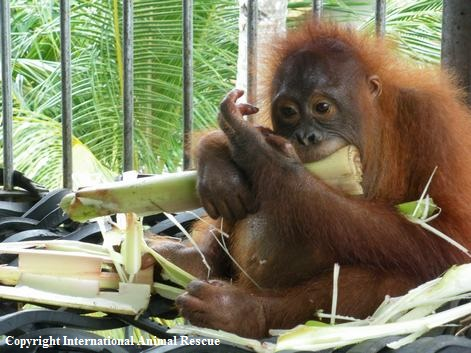 Two zoos commit to enrichment programmes