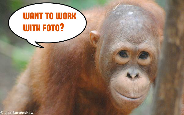 Forest Campaigner – vacancy in FOTO
