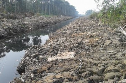 Clearing of Peat Land For Palm Oil in Sarawak