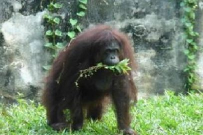 Response from Sentoria regarding chimps