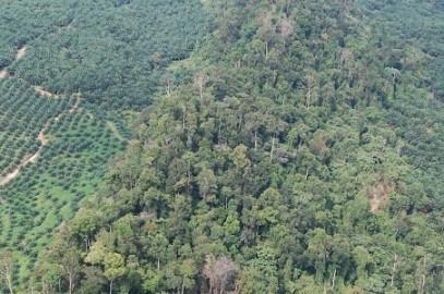 State project threatens Kinabatangan's endangered wildlife