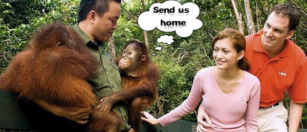 Shangri-La orangutan exploitation: to end on March 31st!