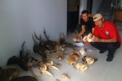 Wildlife parts seized, owner arrested