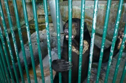 Stop the suffering of sun bears at Miri Crocodile Farm