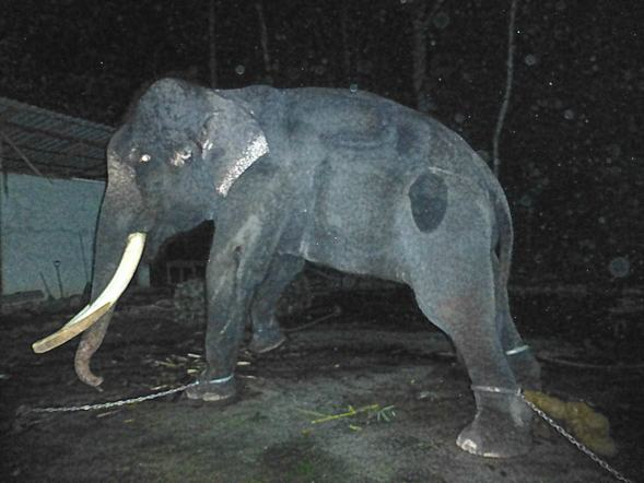 Help save Lasah the elephant