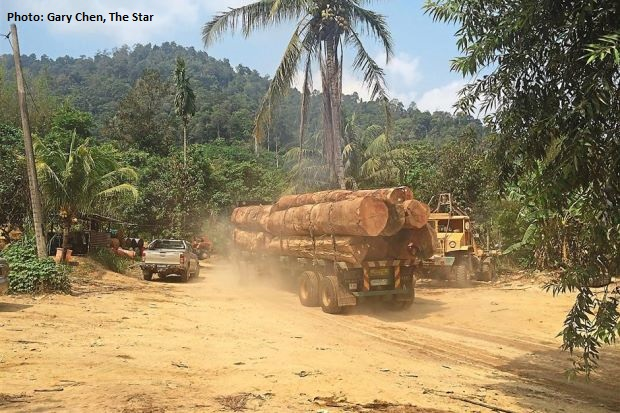 Rampant deforestation in Kedah