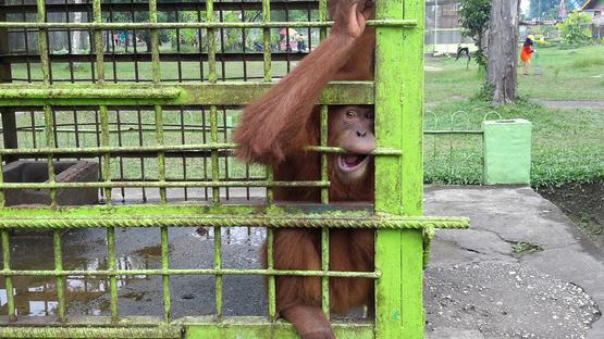 Indonesia's zoos from hell