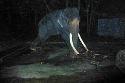 Lasah Elephant Campaign – Update