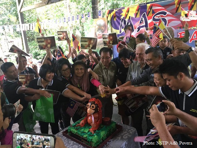 Questioning Semenggoh's orangutan adoption program