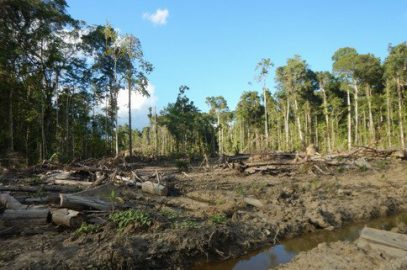 Company owned by Malaysians clearing PNG forests