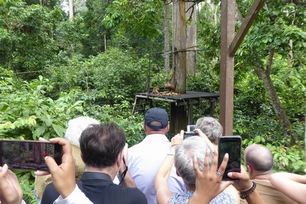 Sepilok orangutan tourism – here's what's wrong