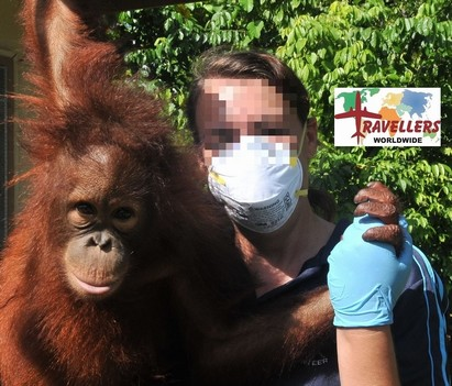 Tell Travellers Worldwide, stop exploiting Sepilok orangutans!