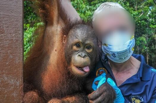British company folds, but will orangutan exploitation at Sepilok end?