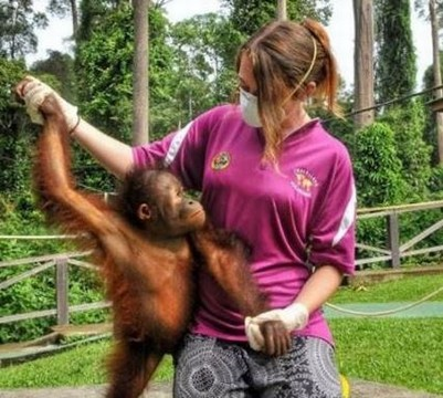 General public finally barred from involvement with orangutan rehab at Sepilok