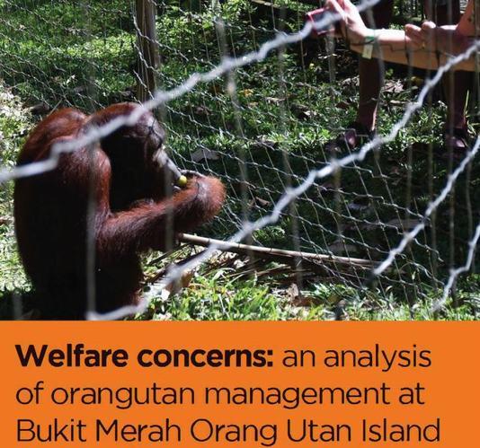 Welfare concerns: an analysis of orangutan management at Bukit Merah Orang Utan Island